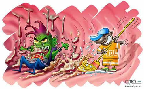 HDL، یا همان کلسترول خوب